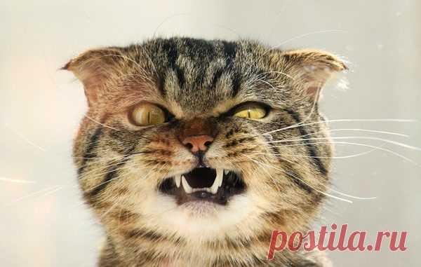 Злопамятный кот – Лап-Ушки.com – любимые животные