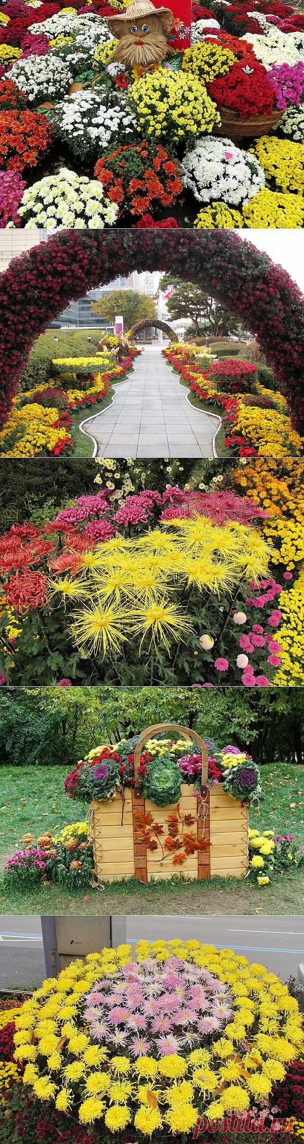 Плэйкаст «Хризантемы»