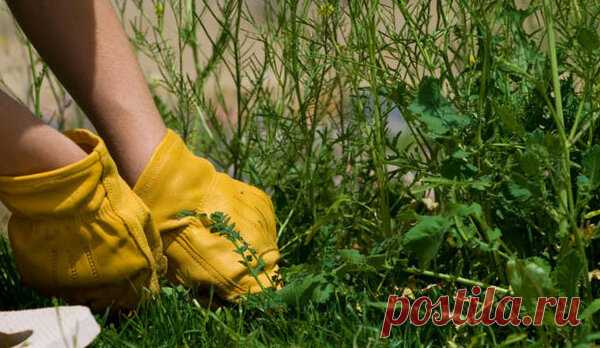 Мой способ борьбы с сорняками на даче | Блоги о даче и огороде, рецептах, красоте и правильном питании, рыбалке, ремонте и интерьере