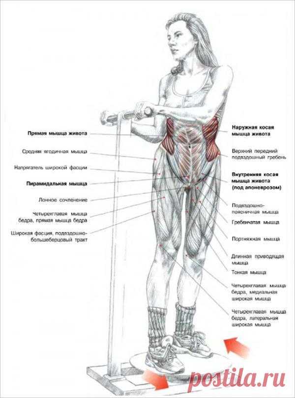 ПРЕСС. Вращения туловища, стоя на тренажере «Твист». Задействует косые мышцы живота (внутренние и наружные), и привлекает к работе  прямые мышцы. Что бы достичь лучшего результата упражнение рекомендуется выполнять  чаще с большим количеством подходов и повторений.