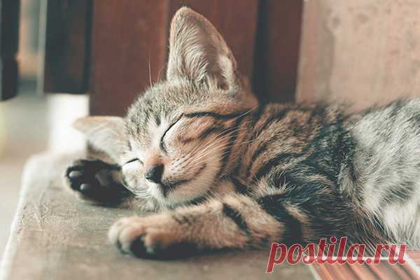 Спать днем или не спать? И как справиться с послеобеденной сонливостью