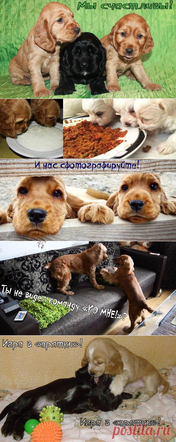 ПОЧТИ ВСЁ О СОБАКАХ (Галина Леонова)