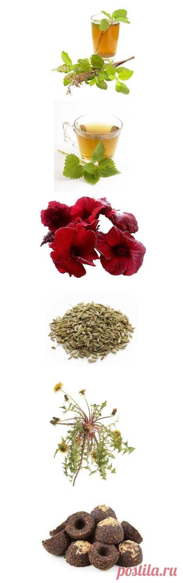 6 уникальных и полезных для здоровья чаев