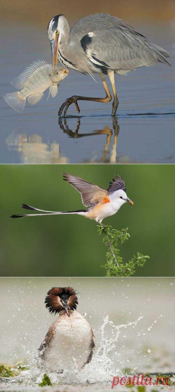 17 удивительных фотографий птиц