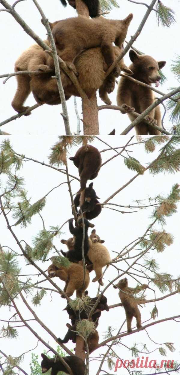 Невероятно – что они все делают на одном тоненьком дереве?)