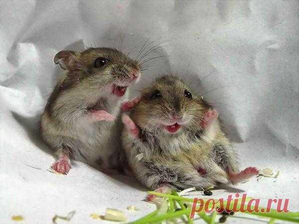 Забавные зверюшки: http://udivitelnoe.mirtesen.ru/blog/43952236844