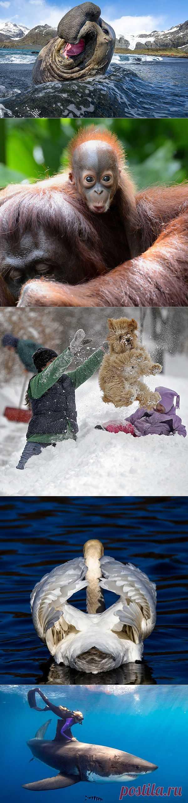 Фото животных от National Geographic | Всё самое лучшее из интернета