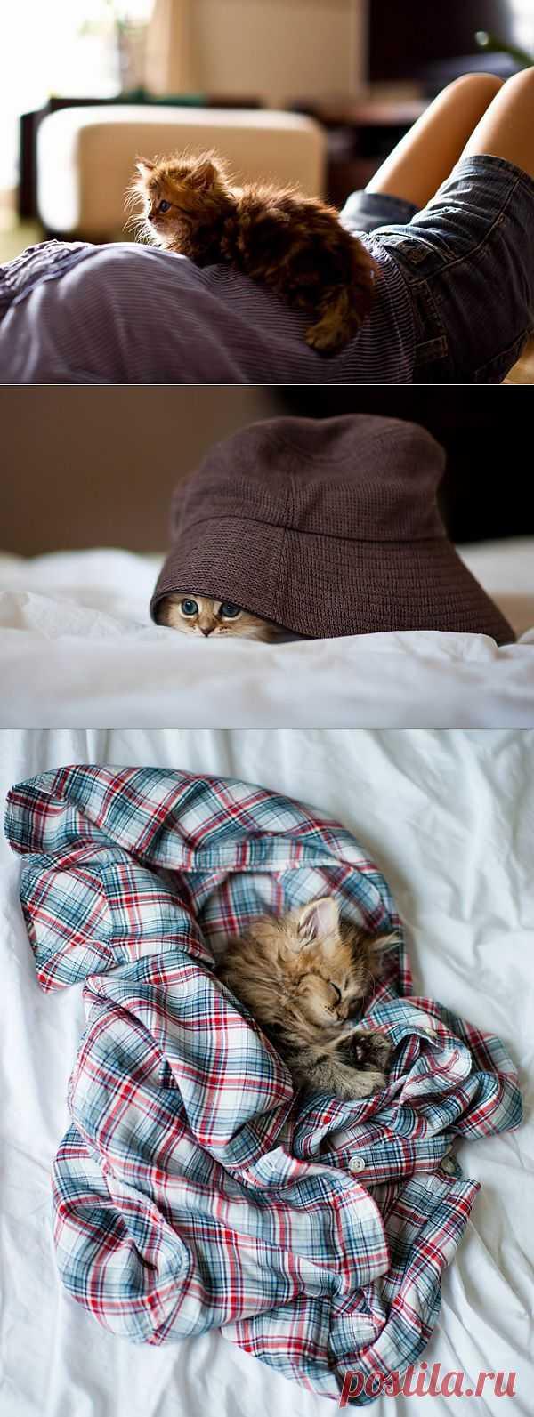 Котёнок-очаровашка (смотреть фото)