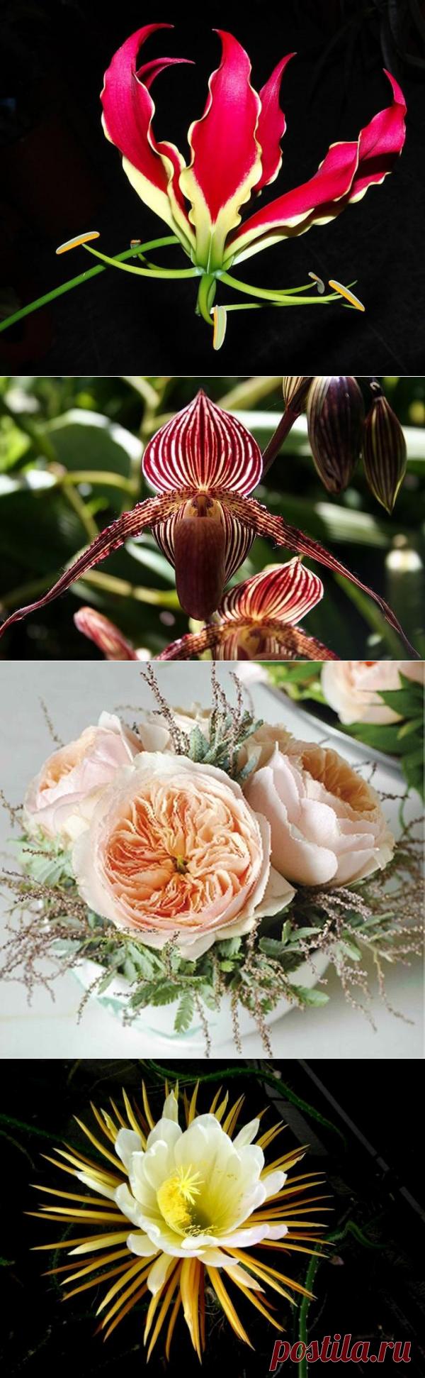 Самые дорогие цветы в мире - Colors.life