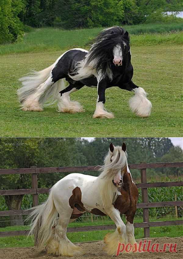широкому демотиватор год лошади соответствии концепцией