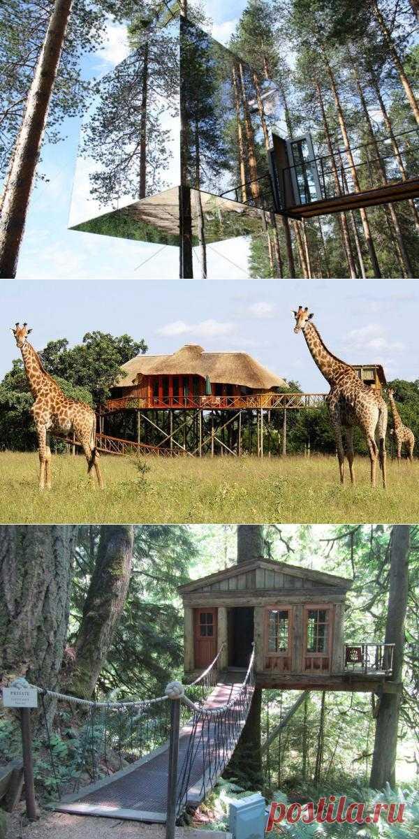10 самых удивительных отелей на деревьях : НОВОСТИ В ФОТОГРАФИЯХ
