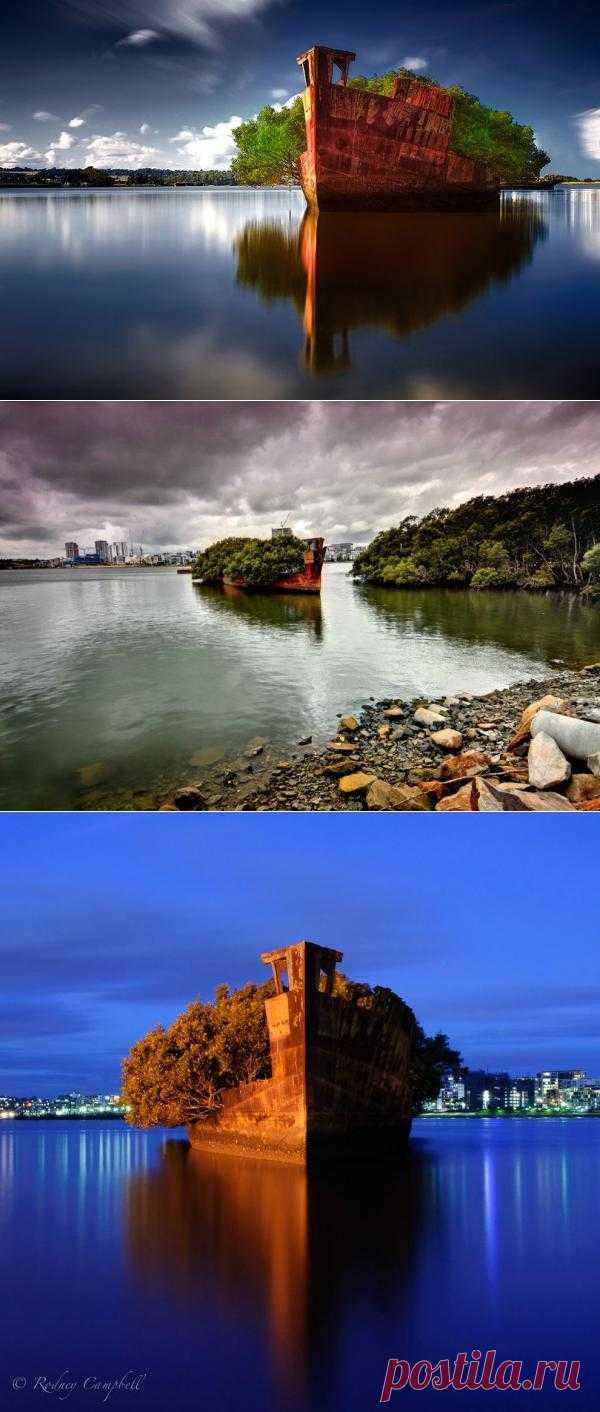 Заброшенное судно SS Ayrfield – плавающий мангровый лес : НОВОСТИ В ФОТОГРАФИЯХ