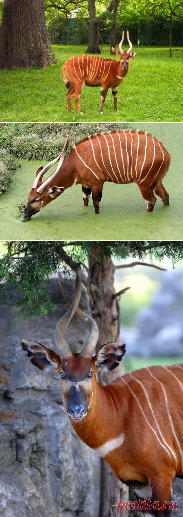 Самые необычные животные в мире (часть 28)
