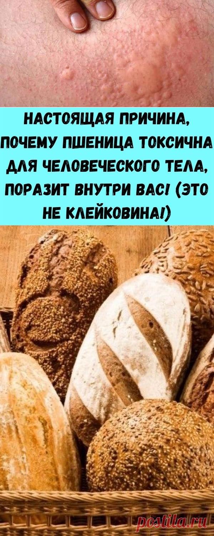 Настоящая причина, почему пшеница токсична для человеческого тела, поразит внутри вас! (Это не клейковина!) - Полезные советы красоты
