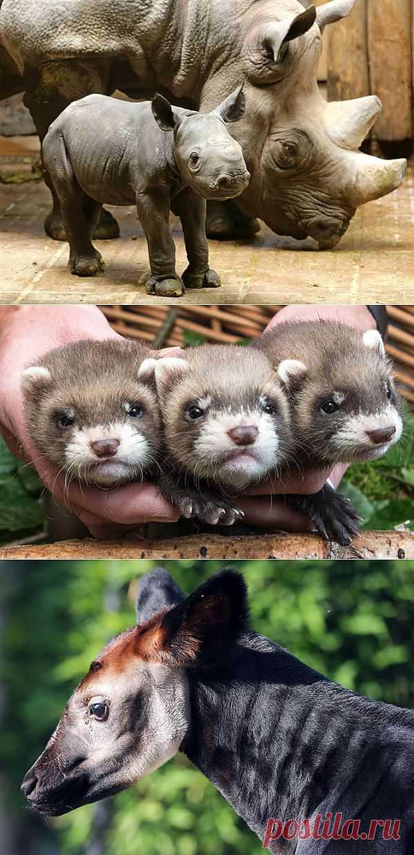 В мире животных | Fresher - Лучшее из Рунета за день