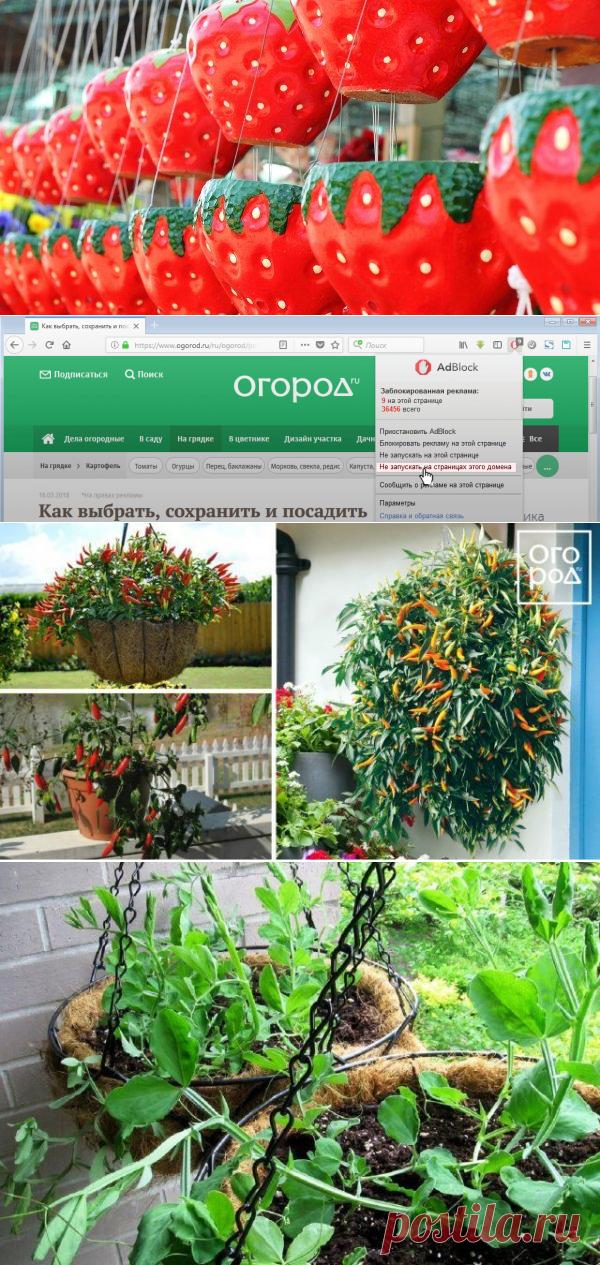 15 идеальных растений для выращивания в подвесных кашпо | Все о грядках (Огород.ru)