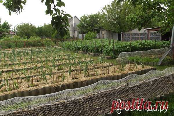 How to achieve successful agriculture.: Group Organic agriculture