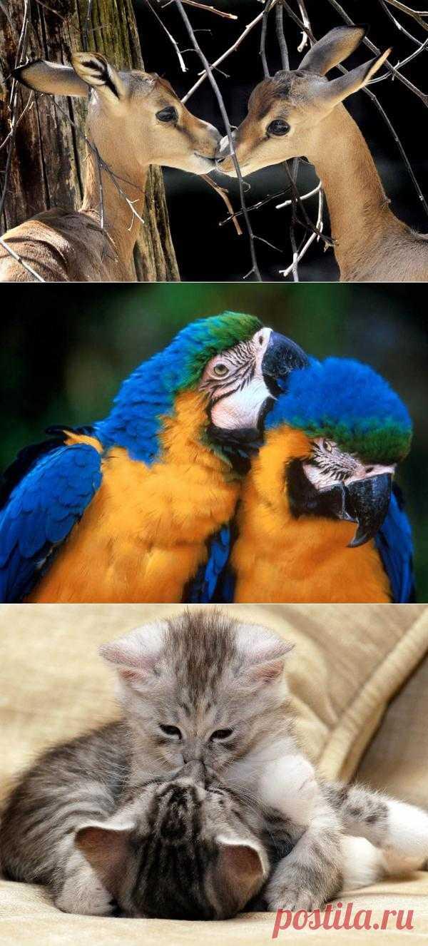Поцелуйки от животных