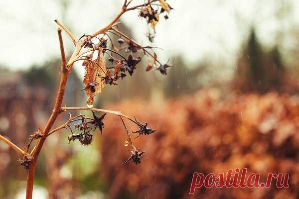 Малина сохнет: причины, симптомы, лечение и профилактика Причины и симптомы засыхания кустов малины. Как спасти кустарник, чтобы малина не пропала. Полезные советы, чтобы защитить малиновый куст.