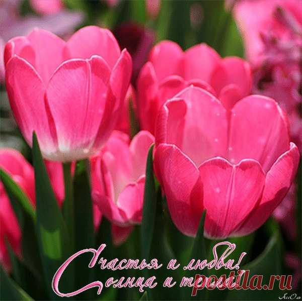 Картинки с днем рождения цветы тюльпаны с надписями
