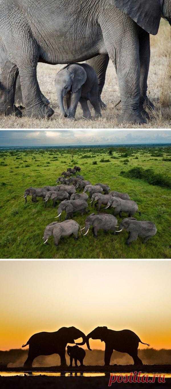 Фотографии дикой природы от National Geographic