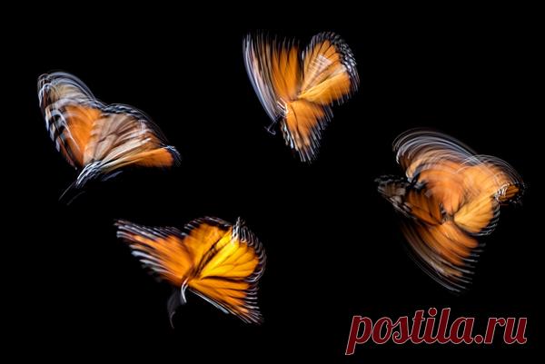 Бабочки порхают в животе? Значит, стресс добрался до вашего кишечника.