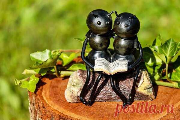 Отличный способ, чтобы навсегда избавиться от муравьев дома и в саду. Единственное, что вам нужно, это огурец | Elena DOM | Яндекс Дзен