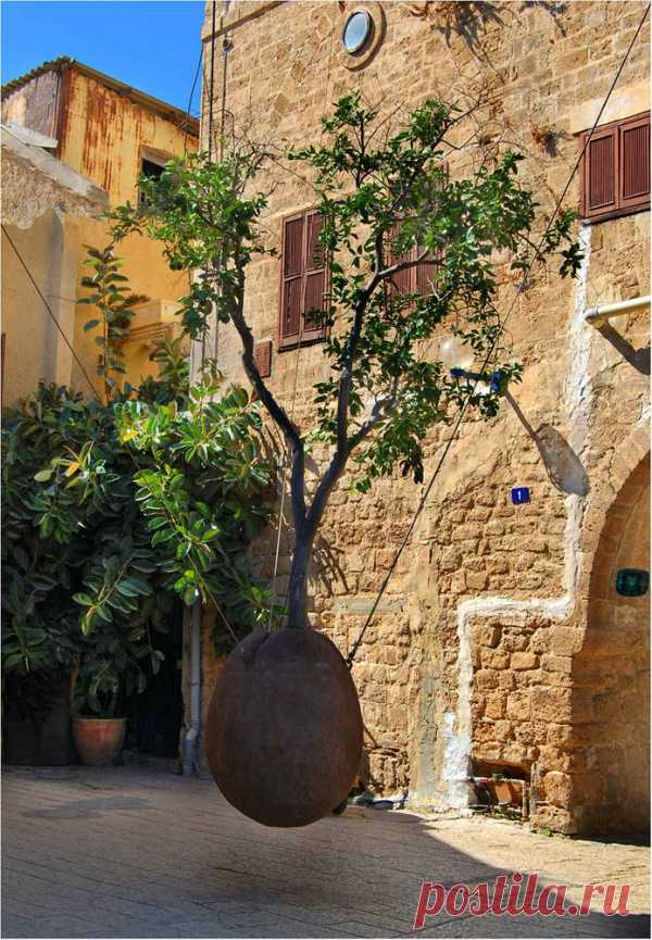 """Дерево в воздухе. """"Висящее дерево"""". Яффо, Тель-Авив, Израиль"""