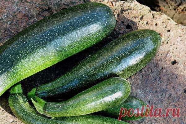 Какие из овощей, не поздно посеять на рассаду в апреле   У-Дачный канал советы от Арины   Яндекс Дзен