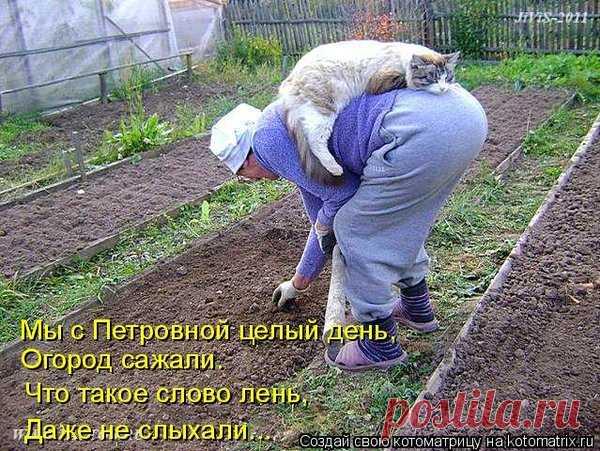 20 фото котов-дачников | Я люблю тебя, жизнь | Яндекс Дзен