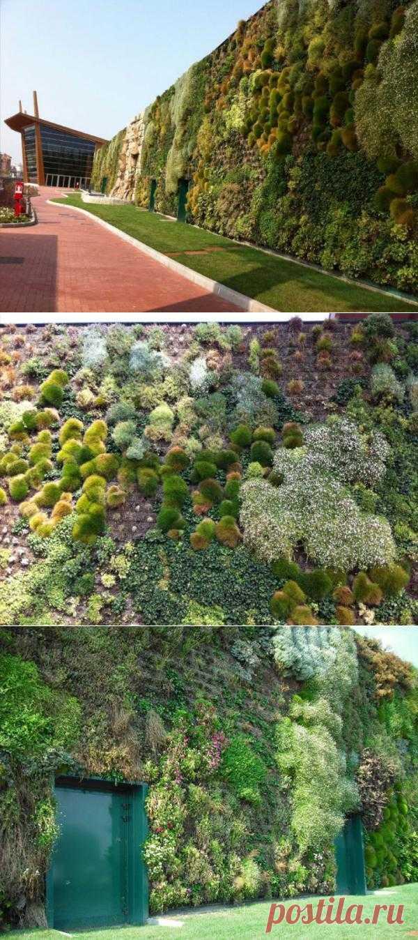 Цветочный сад из стены
