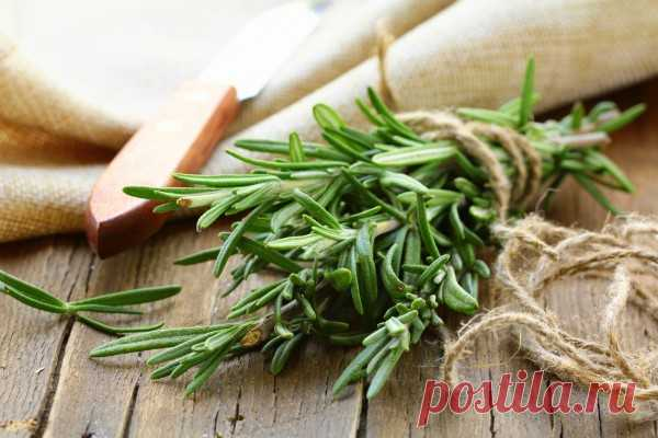 «Эта сильная трава улучшает кровообращение головного мозга, предотвращает рак, незаменима при астме, подагре…»