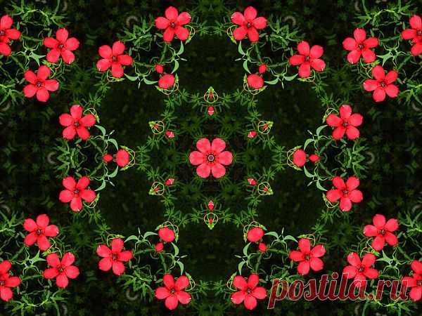 Flower Patterned Ornament  Free Stock Photo HD - Public Domain Pictures