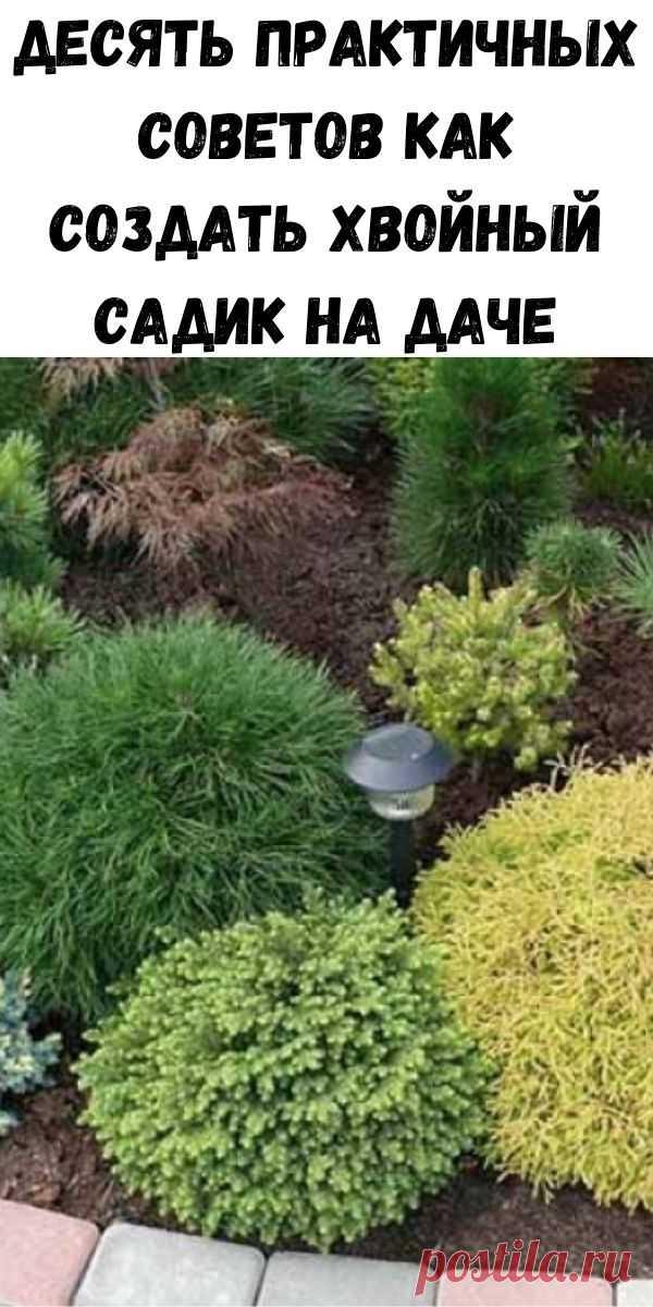 Десять практичных советов как создать хвойный садик на даче - Полезные советы красоты