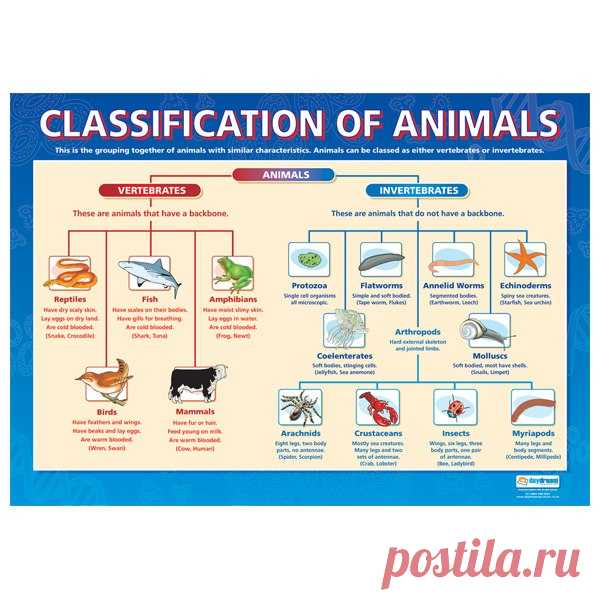 an analysis of the classification of the three categories of types of dogs