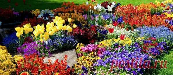 Устали высаживать цветы каждый год? Посадите многолетники и они долго будут радовать своим цветением