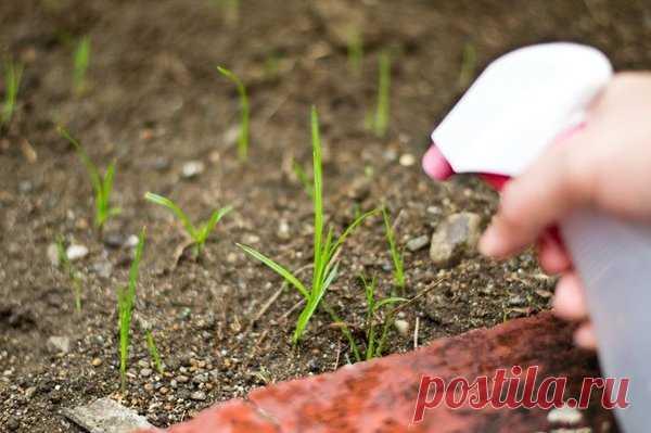 Копеечное натуральное средство для борьбы с сорняками | садоёж | Яндекс Дзен