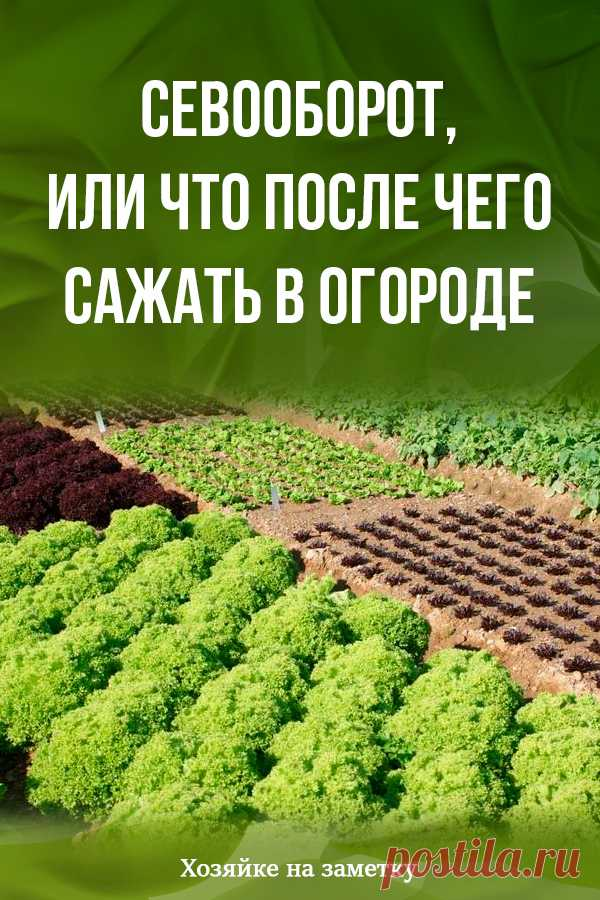 Crop rotation, or That then to put in a kitchen garden