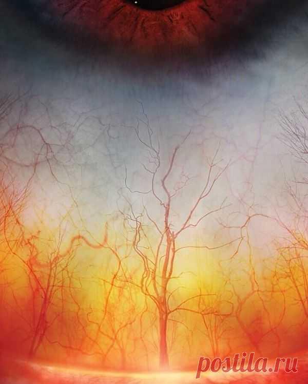 Человеческий глаз под микроскопом