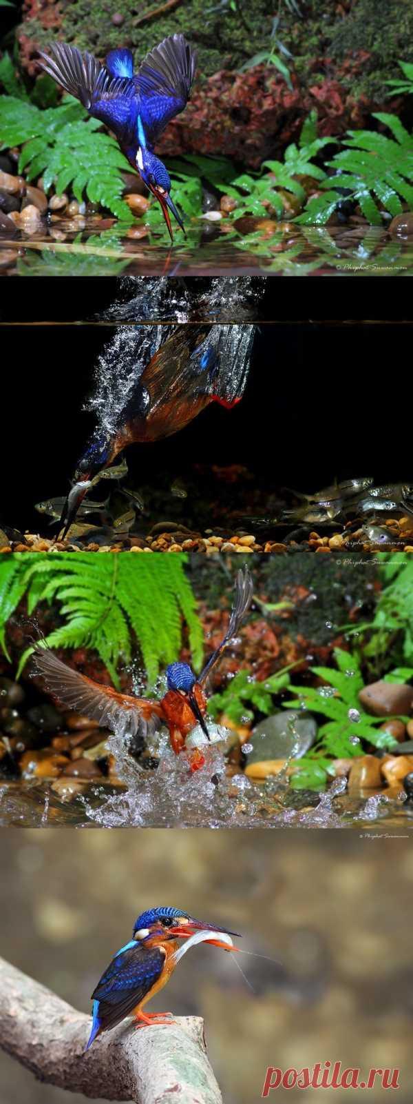 Красивые кадры рыбалки голубого зимородка