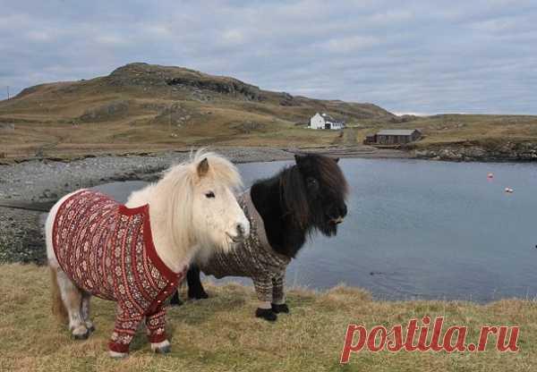 Чтобы пони не замерзли )