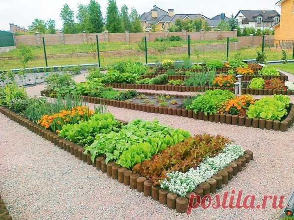 Правила соседства в огороде | огородница юлианна | Яндекс Дзен