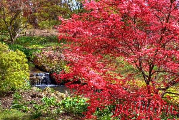 Сад Exbury Gardens в Великобритании