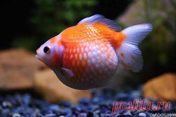 http://aquariumistika.mirtesen.ru/blog/43942130291