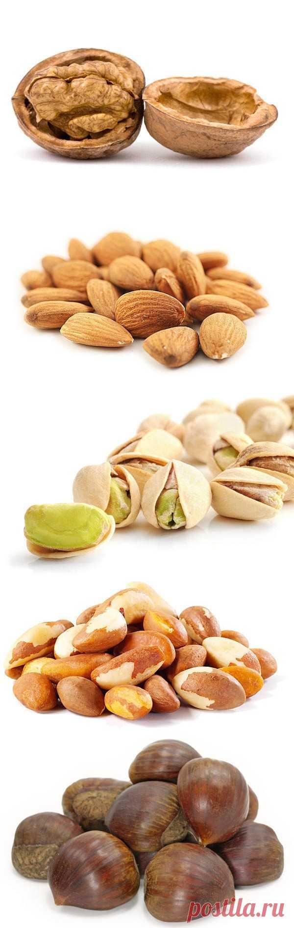 10 интересных фактов о орехах