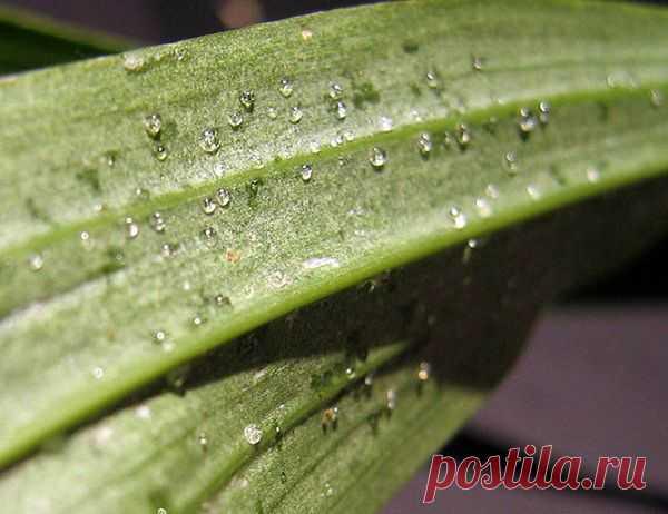 О чем говорят липкие капли на листьях у орхидеи