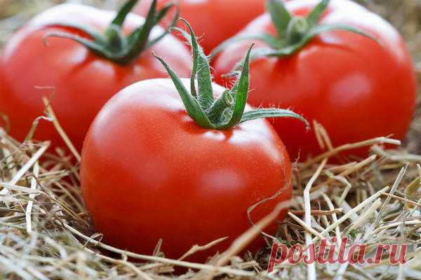 HOW TO KEEP TOMATOES FRESH FOR A LONG TIME