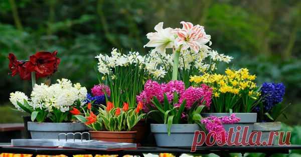 Чтобы комнатные растения цвели часто и подолгу нужно поливать их ЭТИМ раз в месяц!