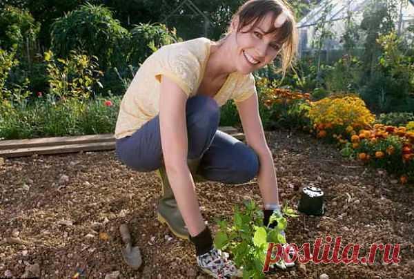 Почему работа в саду делает нас счастливее?