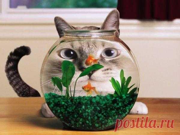 Золотая рыбка, выполни желание!!!